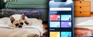 Spotify just launched a new playlist for your pet