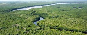 Blue forests, the new protagonists of planet earth