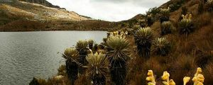 7 Beautiful National Parks To Visit in Colombia