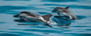 We Are All Affecting the Dolphin Population Using Microplastic Elements