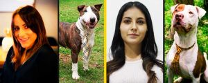 Why Do People Decide To Adopt Stray Dogs?